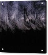 Mist Of The Forest Acrylic Print