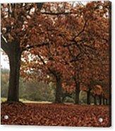 Misty Colours Of Autumn Acrylic Print