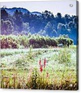 Misty Field In Blue Ridge Mountain Farmlands Acrylic Print