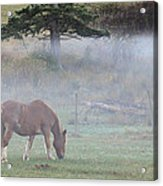Misty Meadow Acrylic Print