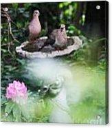 Misty Morning Doves Acrylic Print