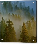 Misty Morning In The Pines Acrylic Print
