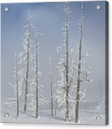 Misty Morning In Yellowstone National Park Acrylic Print