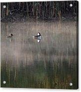 Misty Morning Mergansers Acrylic Print