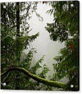 Misty Mossy Morning Acrylic Print