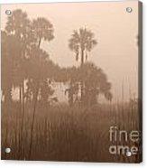 Misty Palmettos Acrylic Print