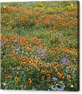 Mixed Wildflowers Blowing Acrylic Print