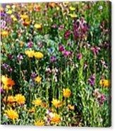 Mixed Wildflowers Acrylic Print