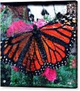 Mnarch Butterfly Acrylic Print