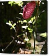 Moccasin Flower Acrylic Print