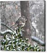 Mockingbird Cold Acrylic Print