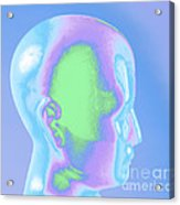 Model Of A Human Head In Profile Acrylic Print