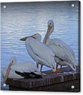 Moe Larry And Curly Acrylic Print