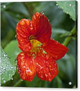 Moist Acrylic Print by Kenneth Hadlock