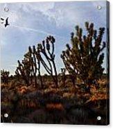 Mojave Desert Joshua Tree With Ravens Acrylic Print