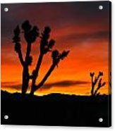 Mojave Morning Acrylic Print