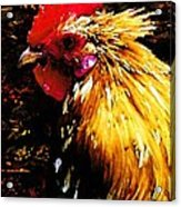 Cock Fighter Acrylic Print