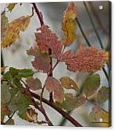 Molting Leaves  Acrylic Print