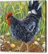 Mom And Chicks Acrylic Print