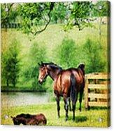 Mom And Foal Acrylic Print