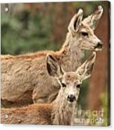 Mom And Junior Acrylic Print