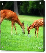 Mom Sharing A Snack With Her Baby Fawn Acrylic Print