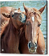 Mommy And Me Acrylic Print