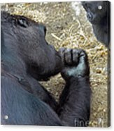 Mommy Are You Asleep Acrylic Print