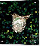 Mommy Hummingbird In The Nest Acrylic Print