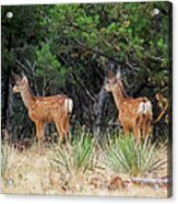 Mommy Where Are You Acrylic Print