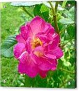 Mom's Beautiful Red Rose Acrylic Print