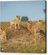 Mom's Coming Back - Dinner Is Almost Here. Acrylic Print