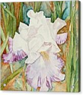 Mom's Iris Acrylic Print
