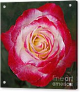 Mom's Red Rose  Acrylic Print