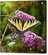 Monarch Butterfly 2 Acrylic Print