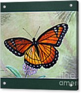 Viceroy Butterfly By George Wood Acrylic Print
