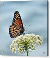 Monarch Butterfly On River Acrylic Print