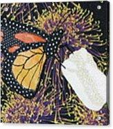 Monarch Butterfly On White Tulip Acrylic Print by Lynda K Boardman