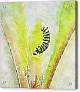 Monarch Caterpillar - Digital Watercolor Acrylic Print