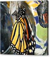 Monarch In A Jar Acrylic Print