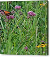 Monarch In The Wildflowers Acrylic Print