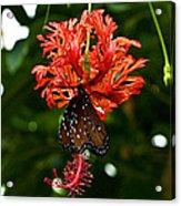 Monarch Ins 42 Acrylic Print