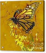 Monarch On Gold Acrylic Print