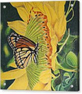 Monarch summer Acrylic Print
