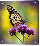 Monarch With Sunflower Acrylic Print
