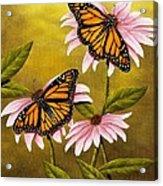 Monarchs And Coneflower Acrylic Print