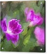 Monet Style Digital Painting Close Up Of Vibrant Pink Kaori Border Plant Acrylic Print