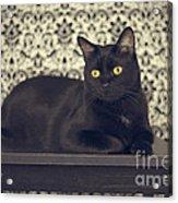 Mongo The Robust Cat Acrylic Print