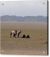 Mongolia Horses Acrylic Print