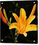 Monikas Lily Acrylic Print